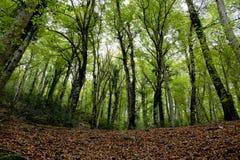 La foresta di Umbrian Immagini Stock
