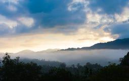 La foresta e frusta o il sole di mattina con nebbia Immagini Stock