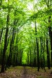 La foresta e la strada Fotografia Stock Libera da Diritti