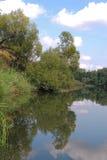 La foresta e la sua riflessione sull'acqua Immagine Stock