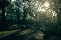La foresta ed il tramonto in parco Fotografie Stock Libere da Diritti