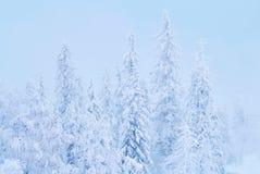 La foresta favolosa al tramonto, tutto dell'inverno di Natale è coperta di neve Pino ed alberi attillati coperti in neve blizzard Immagini Stock