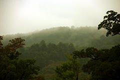 La foresta giapponese Fotografia Stock Libera da Diritti