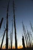 La foresta guasto Immagini Stock Libere da Diritti