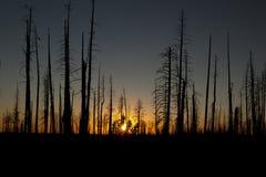 La foresta guasto Fotografie Stock