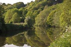 La foresta ha riflesso sul fiume Fotografia Stock Libera da Diritti