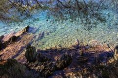 La foresta incontra il mare Immagine Stock