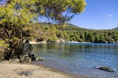 La foresta incontra il mare in Sithonia, Grecia Fotografie Stock