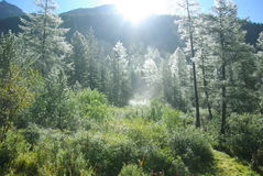 La foresta leggiadramente. fotografia stock libera da diritti