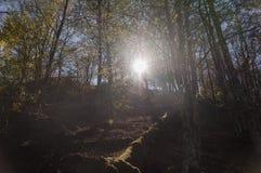 La foresta magica Fotografia Stock