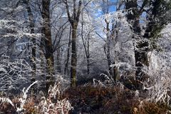 La foresta magica immagine stock libera da diritti