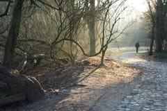 La foresta mystical fotografia stock