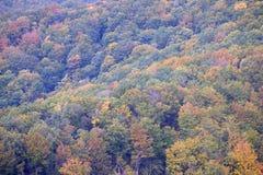 La foresta nei colori di autunno Fotografie Stock