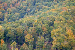 La foresta nei colori di autunno Immagine Stock Libera da Diritti
