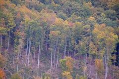 La foresta nei colori di autunno Fotografia Stock