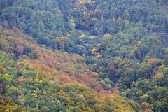 La foresta nei colori di autunno Immagine Stock