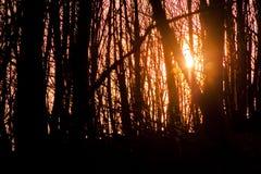 La foresta nella caduta Fotografie Stock