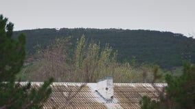 La foresta nella distanza dietro il vecchio tetto della casa archivi video