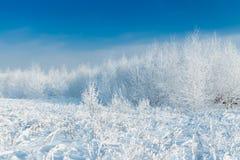 La foresta nevosa a gennaio immagini stock libere da diritti