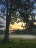 La foresta pluviale Fotografia Stock Libera da Diritti
