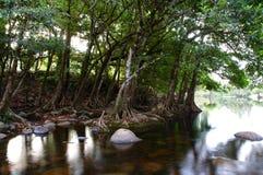 La foresta pluviale Immagini Stock Libere da Diritti