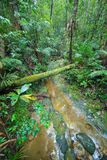 La foresta pluviale del Borneo, muschio ha riguardato i branchs delle radici nella giungla del parco nazionale di Kubah, Sarawak, Immagini Stock