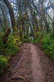 La foresta pluviale, Kilimanjaro Immagine Stock Libera da Diritti