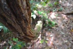 La foresta pluviale in Sabah, Borneo immagini stock libere da diritti