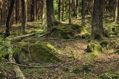 La foresta primigenia Immagine Stock