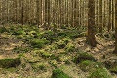 La foresta primigenia Fotografia Stock