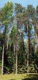 La foresta selvaggia Fotografia Stock Libera da Diritti