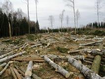 La foresta tagliata Fotografia Stock
