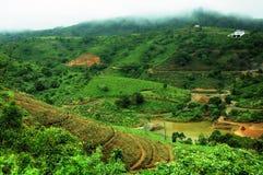 La foresta tropicale delle alte montagne con le nuvole che passano in India Immagine Stock Libera da Diritti