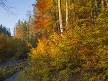 La foresta variopinta di autunno con l'insenatura della corrente lapida le felci del muschio e Fotografia Stock Libera da Diritti