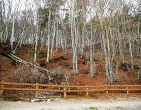 La foresta vicino al Mar Baltico Fotografia Stock