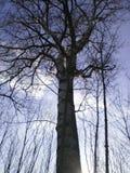La foresta vicino alla città Fotografie Stock Libere da Diritti