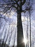 La foresta vicino alla città Fotografia Stock