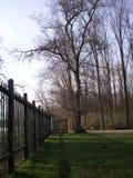 La foresta vicino alla città Immagine Stock