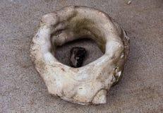 la forma única de la piedra fotos de archivo libres de regalías