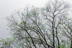 La forma de árbol Imagenes de archivo