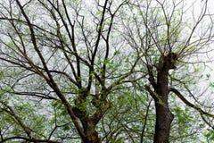 La forma de árbol Fotografía de archivo libre de regalías