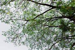 La forma de árbol Fotos de archivo libres de regalías