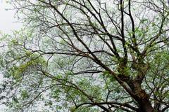 La forma de árbol Imagen de archivo