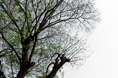 La forma de árbol Imagen de archivo libre de regalías