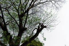 La forma de árbol Foto de archivo