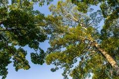 La forma de árbol Foto de archivo libre de regalías