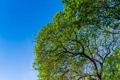 La forma de árbol Fotografía de archivo
