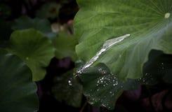 La forma de corriente del agua Imagen de archivo libre de regalías