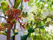 La forma de la orquídea le gusta un pájaro Foto de archivo