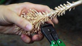 La forma de los ornamentos del oro después de verter el oro almacen de metraje de vídeo